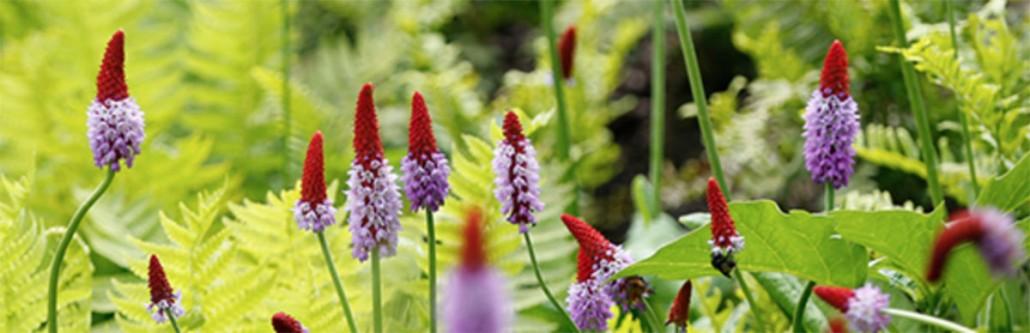 fleurs chaumont